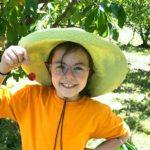 Organic Cherry-picking Days at Valley View Orchard